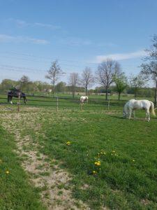 Die Pferde des Verein für Reittherapie Kreis Unna